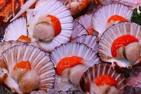 dogs eat small, health benefits scallops, grocery store dogs, scallops grocery store, eat fresh raw, fresh raw seafood, high quality oils, raw scallops scallops, store dogs enjoy, dogs eat fresh, What Can Dogs Eat Scallops Scallops Grocery Store High Quality Oils